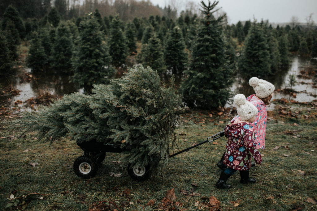 Finding A Christmas Tree In Raincouver